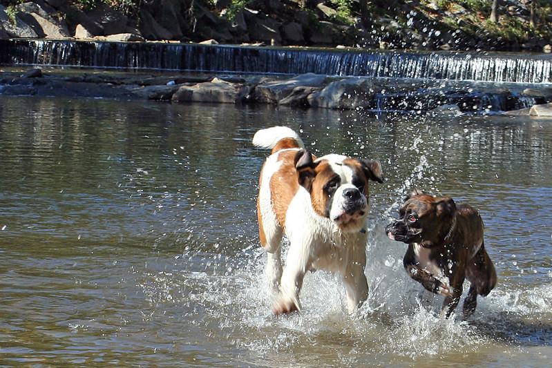 Shirlington Dog Park Intangiblearts On Flickr